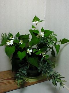 十薬と呼ばれる植物