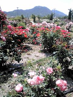 素晴らしい空間!すべて薔薇!