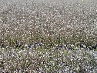 見奈良の花畑(<br />  おまけ編)