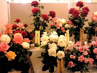 萬翠荘の薔薇展