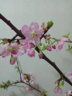 春がやってきました