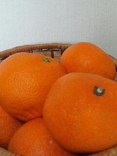 柑橘系の香りで深呼吸