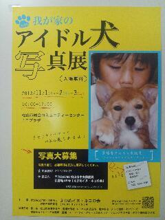 アイドル犬写真展のお知らせ